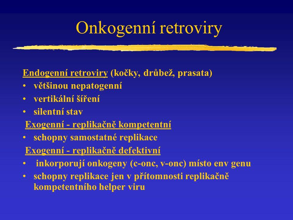 Onkogenní retroviry Endogenní retroviry (kočky, drůbež, prasata) většinou nepatogenní vertikální šíření silentní stav Exogenní - replikačně kompetentní schopny samostatné replikace Exogenní - replikačně defektivní inkorporují onkogeny (c-onc, v-onc) místo env genu schopny replikace jen v přítomnosti replikačně kompetentního helper viru