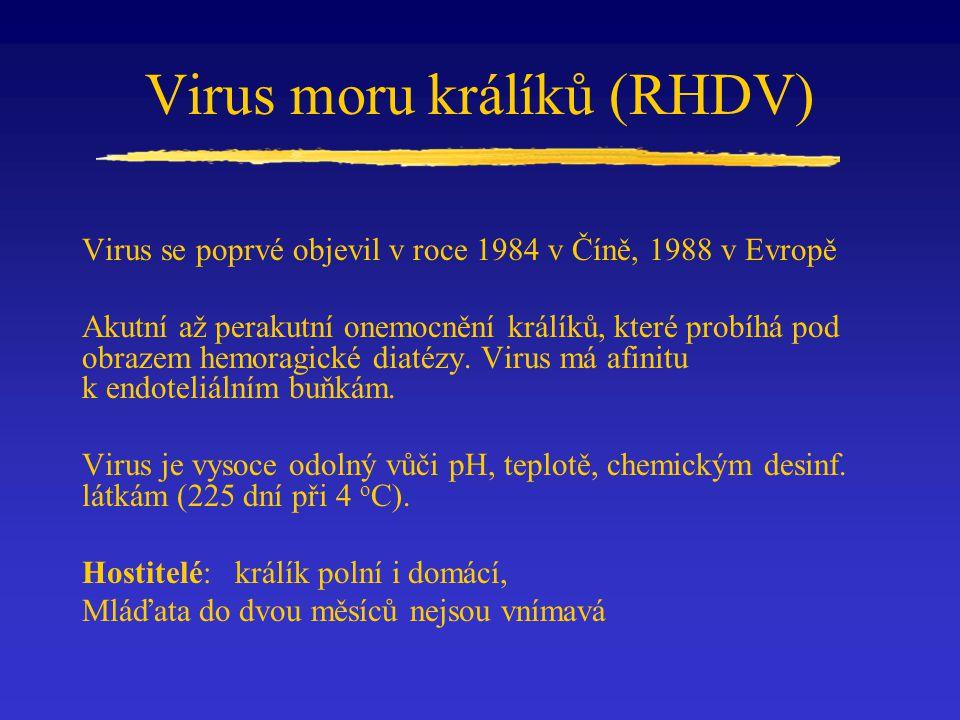 Virus moru králíků (RHDV) Virus se poprvé objevil v roce 1984 v Číně, 1988 v Evropě Akutní až perakutní onemocnění králíků, které probíhá pod obrazem hemoragické diatézy.
