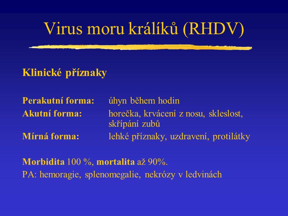 Virus moru králíků (RHDV) Klinické příznaky Perakutní forma: úhyn během hodin Akutní forma:horečka, krvácení z nosu, skleslost, skřípání zubů Mírná forma:lehké příznaky, uzdravení, protilátky Morbidita 100 %, mortalita až 90%.