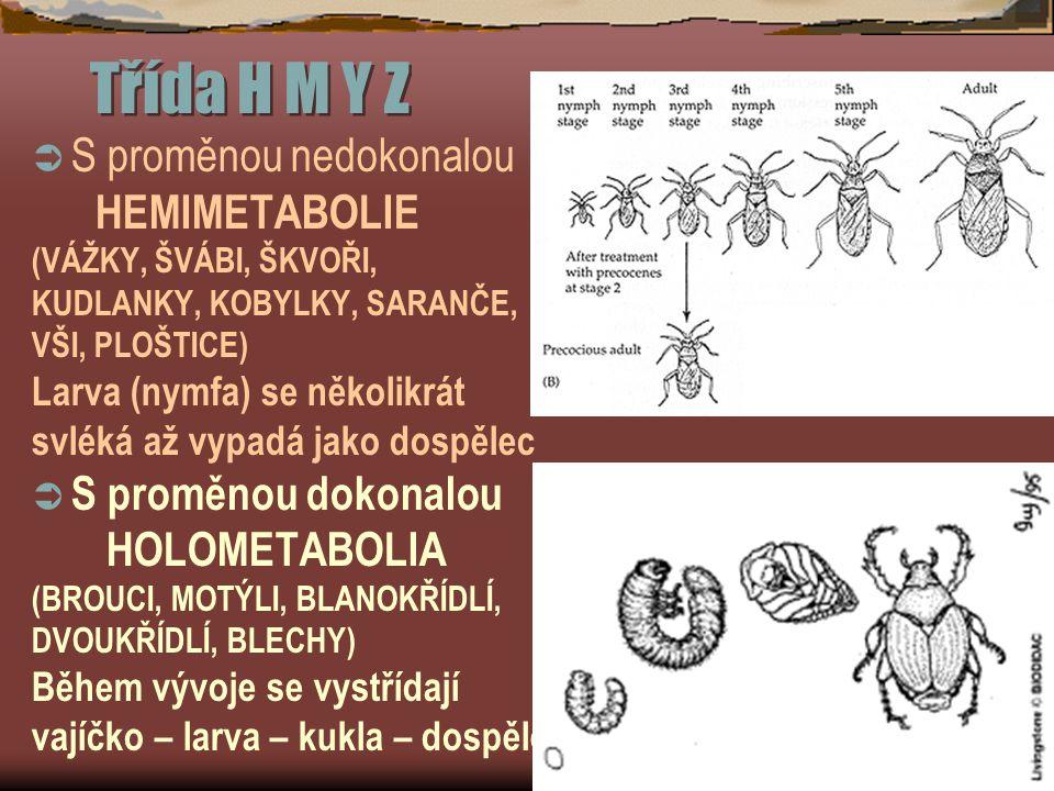 Třída H M Y Z  S proměnou nedokonalou HEMIMETABOLIE (VÁŽKY, ŠVÁBI, ŠKVOŘI, KUDLANKY, KOBYLKY, SARANČE, VŠI, PLOŠTICE) Larva (nymfa) se několikrát svléká až vypadá jako dospělec  S proměnou dokonalou HOLOMETABOLIA (BROUCI, MOTÝLI, BLANOKŘÍDLÍ, DVOUKŘÍDLÍ, BLECHY) Během vývoje se vystřídají vajíčko – larva – kukla – dospělec