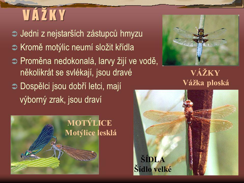 V Á Ž K Y  Jedni z nejstarších zástupců hmyzu  Kromě motýlic neumí složit křídla  Proměna nedokonalá, larvy žijí ve vodě, několikrát se svlékají, jsou dravé  Dospělci jsou dobří letci, mají výborný zrak, jsou draví VÁŽKY Vážka ploská ŠÍDLA Šídlo velké MOTÝLICE Motýlice lesklá