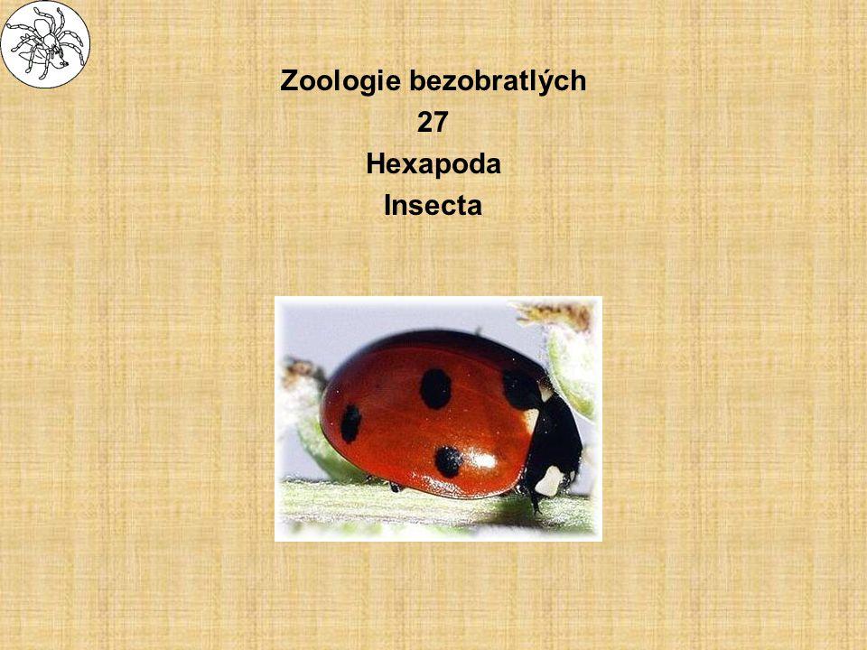 """Insecta - hmyz –stavba těla tělo článkované rozdělené na tagmata –hlava - caput –hruď - thorax - 3 segmenty –zadeček - abdomen (""""bříško ) velikost –0,2 mm až 30 cm"""