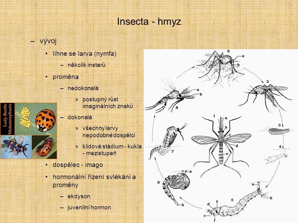 Insecta - hmyz –vývoj líhne se larva (nymfa) –několik instarů proměna –nedokonalá »postupný růst imaginálních znaků –dokonalá »všechny larvy nepodobné