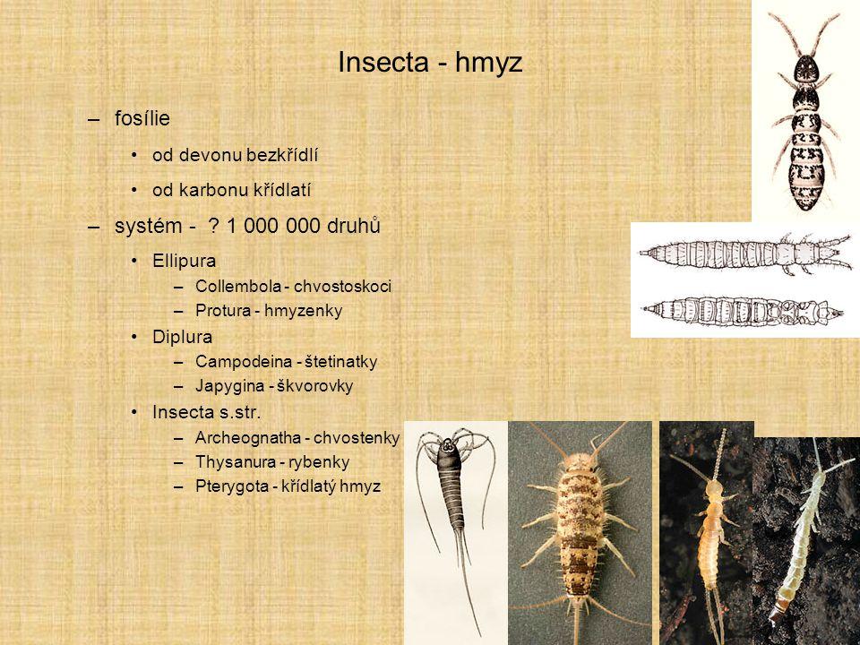 Insecta - hmyz –fosílie od devonu bezkřídlí od karbonu křídlatí –systém - ? 1 000 000 druhů Ellipura –Collembola - chvostoskoci –Protura - hmyzenky Di