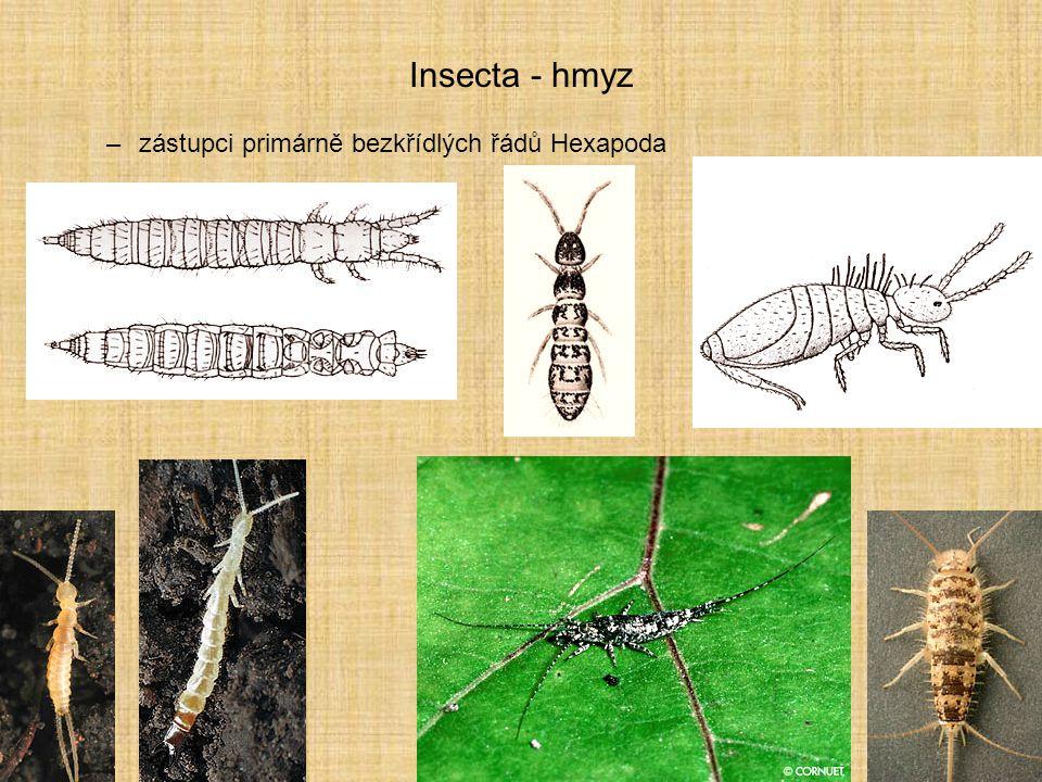 Insecta - hmyz –zástupci primárně bezkřídlých řádů Hexapoda