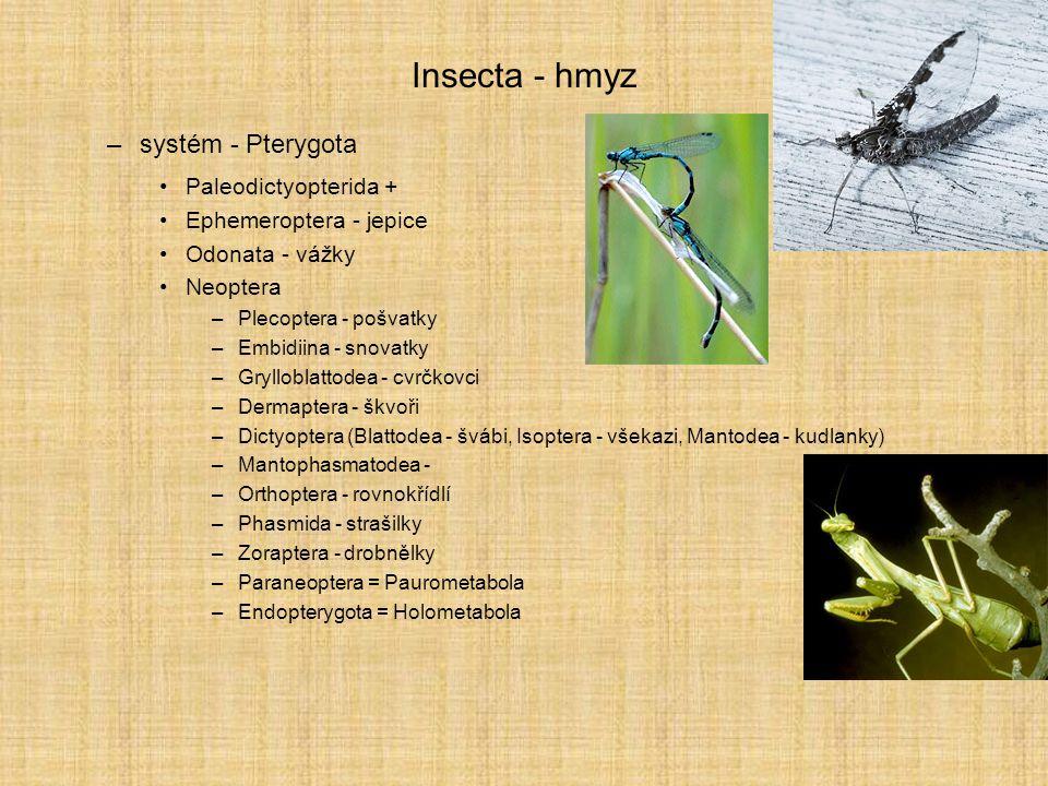 Insecta - hmyz –systém - Pterygota Paleodictyopterida + Ephemeroptera - jepice Odonata - vážky Neoptera –Plecoptera - pošvatky –Embidiina - snovatky –