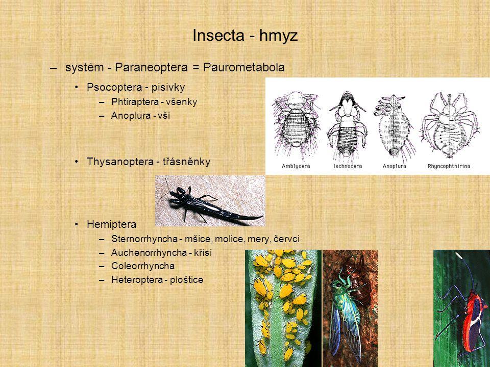 Insecta - hmyz –systém - Paraneoptera = Paurometabola Psocoptera - pisivky –Phtiraptera - všenky –Anoplura - vši Thysanoptera - třásněnky Hemiptera –S