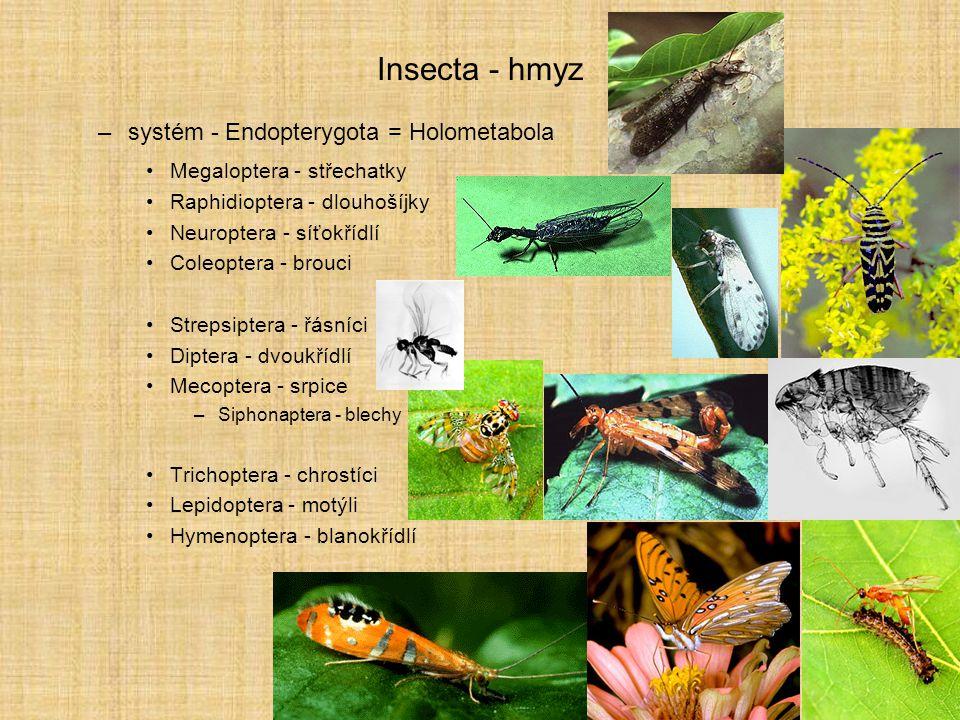 Insecta - hmyz –systém - Endopterygota = Holometabola Megaloptera - střechatky Raphidioptera - dlouhošíjky Neuroptera - síťokřídlí Coleoptera - brouci