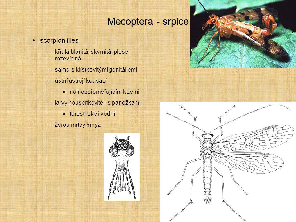 Mecoptera - srpice scorpion flies –křídla blanitá, skvrnitá, ploše rozevřená –samci s klíštkovitými genitáliemi –ústní ústrojí kousací »na nosci směřu