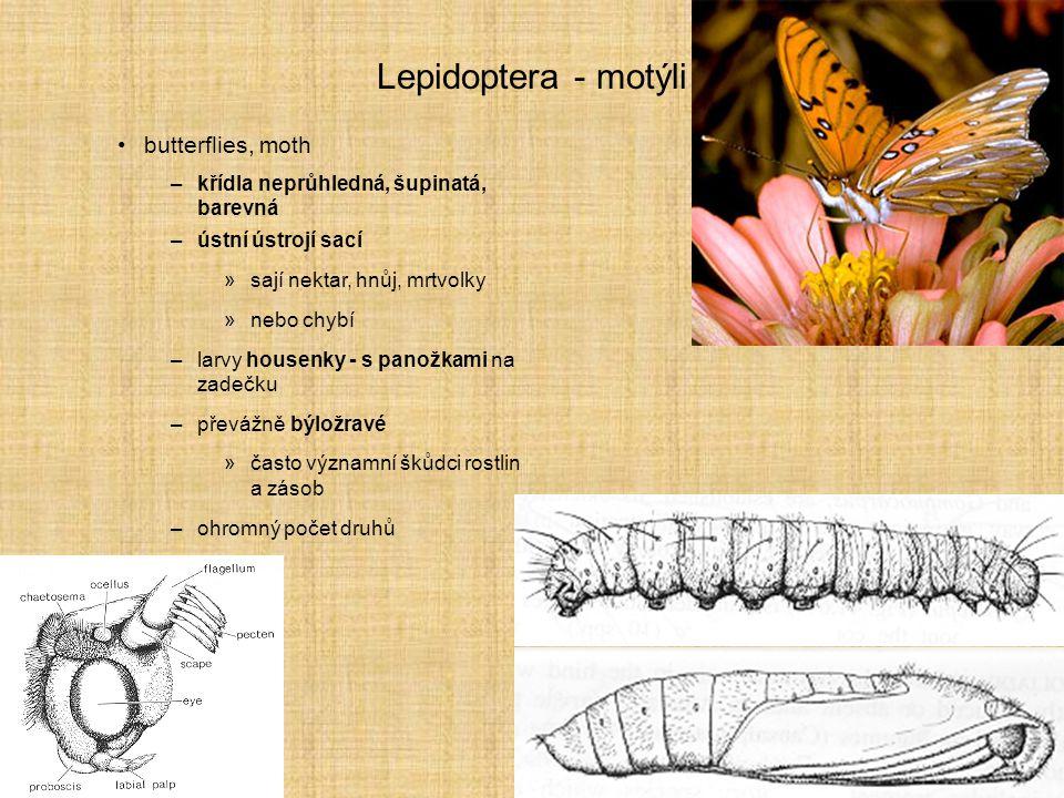 Lepidoptera - motýli butterflies, moth –křídla neprůhledná, šupinatá, barevná –ústní ústrojí sací »sají nektar, hnůj, mrtvolky »nebo chybí –larvy hous