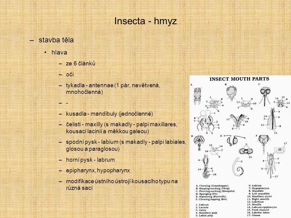 Insecta - hmyz –systém - Pterygota Paleodictyopterida + Ephemeroptera - jepice Odonata - vážky Neoptera –Plecoptera - pošvatky –Embidiina - snovatky –Grylloblattodea - cvrčkovci –Dermaptera - škvoři –Dictyoptera (Blattodea - švábi, Isoptera - všekazi, Mantodea - kudlanky) –Mantophasmatodea - –Orthoptera - rovnokřídlí –Phasmida - strašilky –Zoraptera - drobnělky –Paraneoptera = Paurometabola –Endopterygota = Holometabola