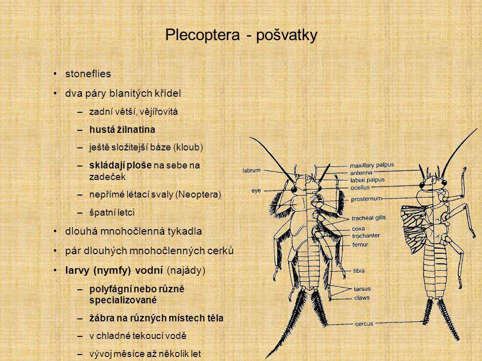 Plecoptera - pošvatky stoneflies dva páry blanitých křídel –zadní větší, vějířovitá –hustá žilnatina –ještě složitejší báze (kloub) –skládají ploše na