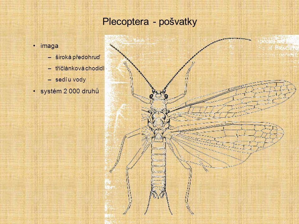 Plecoptera - pošvatky imaga –široká předohruď –tříčlánková chodidla –sedí u vody systém 2 000 druhů