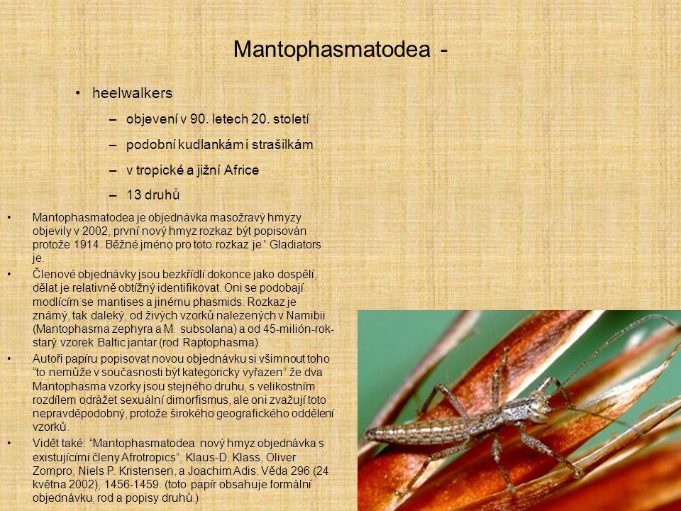 Mantophasmatodea - heelwalkers –objevení v 90. letech 20. století –podobní kudlankám i strašilkám –v tropické a jižní Africe –13 druhů Mantophasmatode