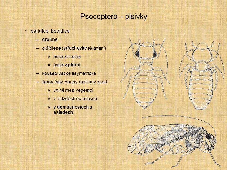 Psocoptera - pisivky barklice, booklice –drobné –okřídlené (střechovité skládání) »řídká žilnatina »často apterní –kousací ústrojí asymetrické –žerou