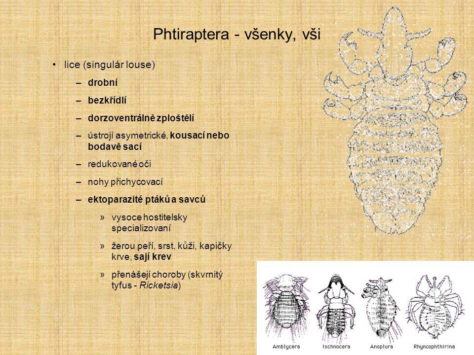 Phtiraptera - všenky, vši lice (singulár louse) –drobní –bezkřídlí –dorzoventrálně zploštělí –ústrojí asymetrické, kousací nebo bodavě sací –redukovan