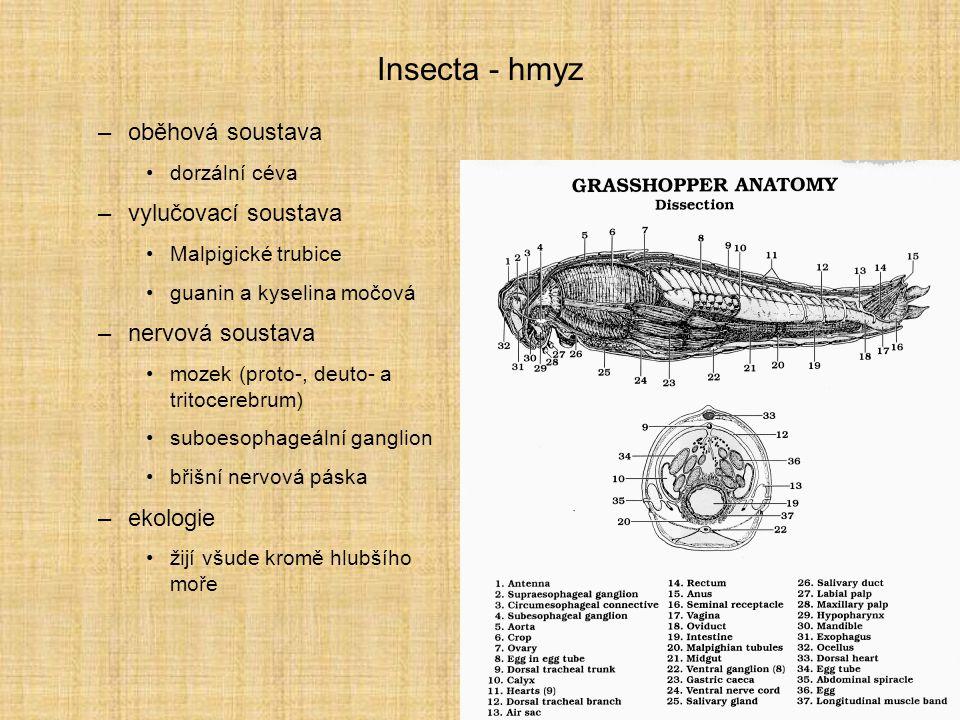 Zoologie Hexapoda, Insecta - přehled řádů Hemimetabola