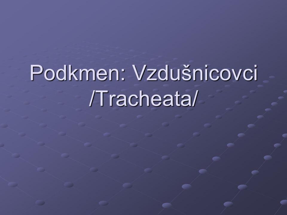 Podkmen: Vzdušnicovci /Tracheata/