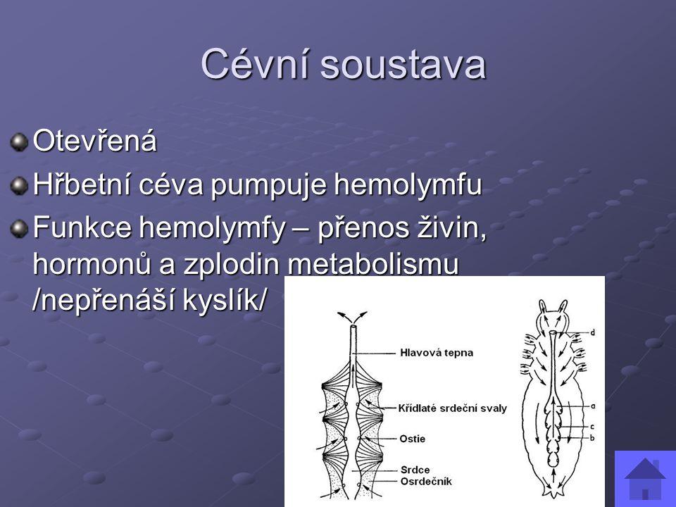 Cévní soustava Cévní soustava Otevřená Hřbetní céva pumpuje hemolymfu Funkce hemolymfy – přenos živin, hormonů a zplodin metabolismu /nepřenáší kyslík/
