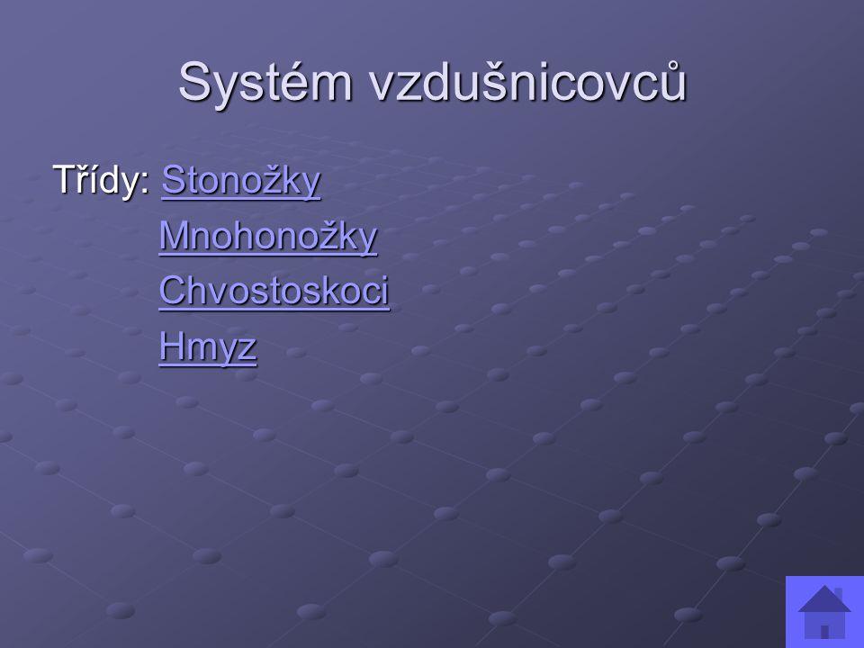 Systém vzdušnicovců Třídy: Stonožky Stonožky Mnohonožky MnohonožkyMnohonožky Chvostoskoci ChvostoskociChvostoskoci Hmyz HmyzHmyz