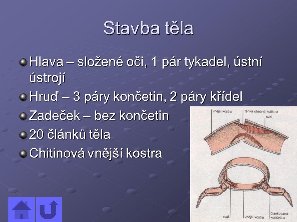 WWW zdroje www.scienceclass.com www.enchantedlearning.com www.biolib.cz www.earthlife.net http://animaldiversity.ummz.umich.edu/si te/index.html http://animaldiversity.ummz.umich.edu/si te/index.html http://cs.wikipedia.org