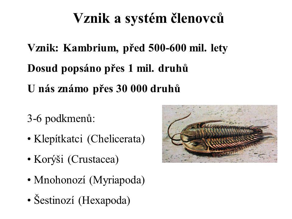 Vznik a systém členovců Vznik: Kambrium, před 500-600 mil. lety Dosud popsáno přes 1 mil. druhů U nás známo přes 30 000 druhů 3-6 podkmenů: Klepítkatc