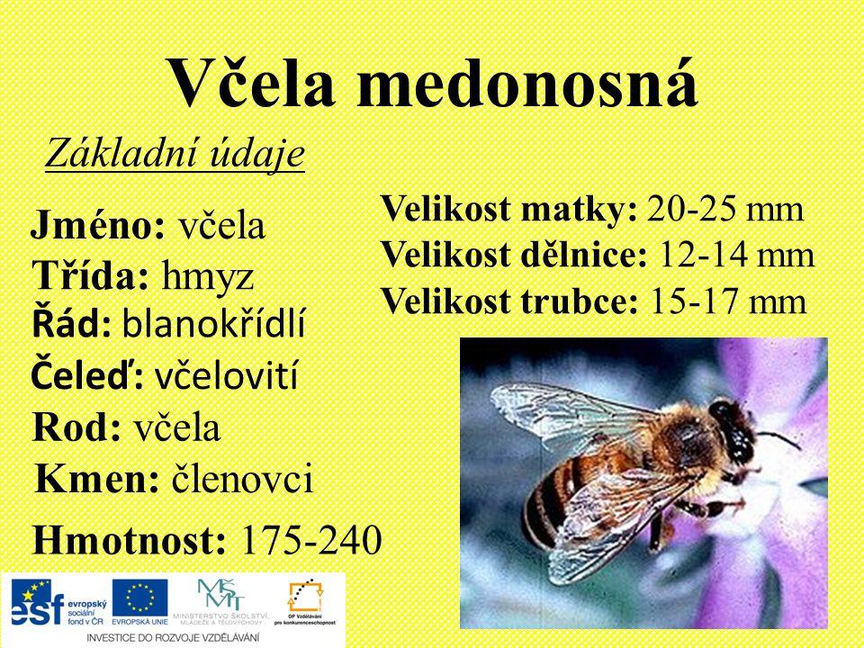 Význam včely Včely poskytují lidem přímý užitek – med, vosk, mateří kašičku, propolis a včelí jed.