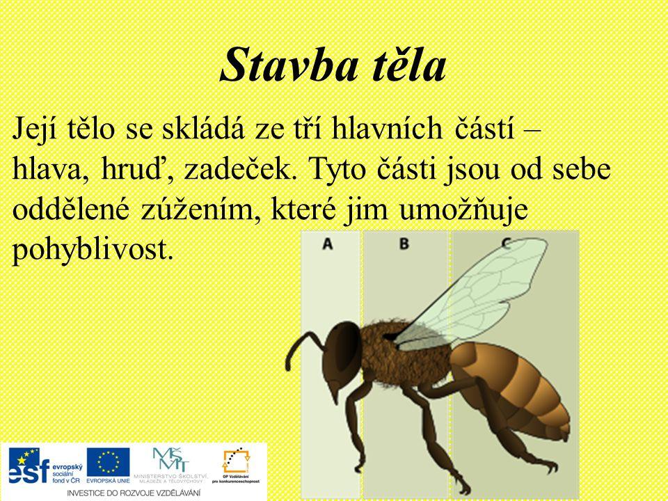 Nebezpečí pro včely Používání chemických látek na polích, v zahradách a v sadech.