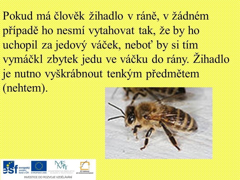 Opakování Kde včela medonosná žije: b) v úlu c) v noře a) v zemi