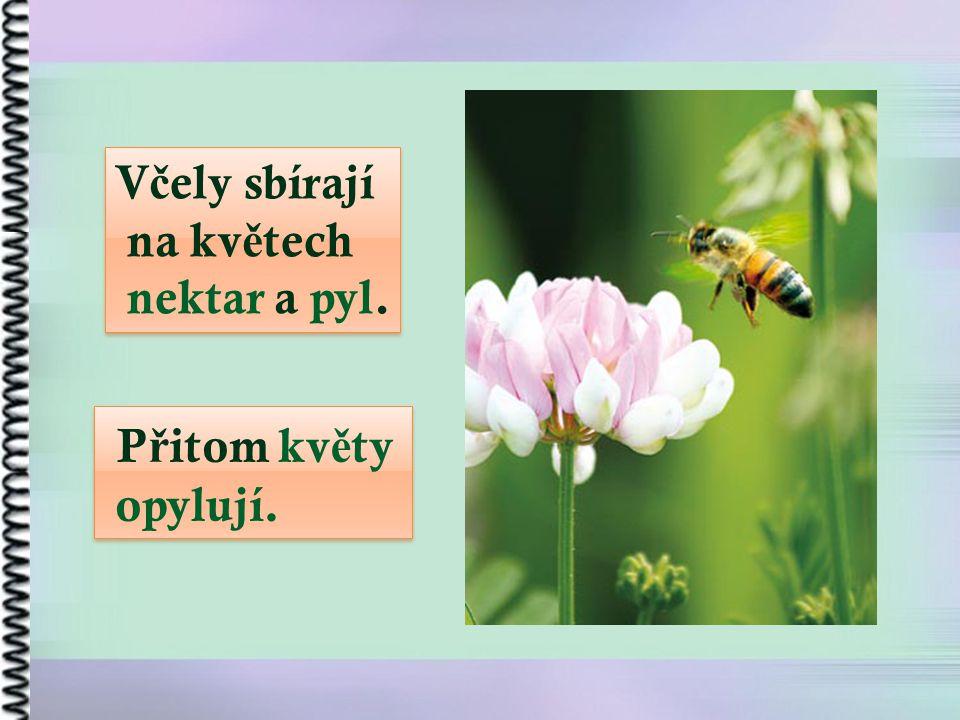 V č ely sbírají na kv ě tech nektar a pyl. V č ely sbírají na kv ě tech nektar a pyl. P ř itom kv ě ty opylují. P ř itom kv ě ty opylují.