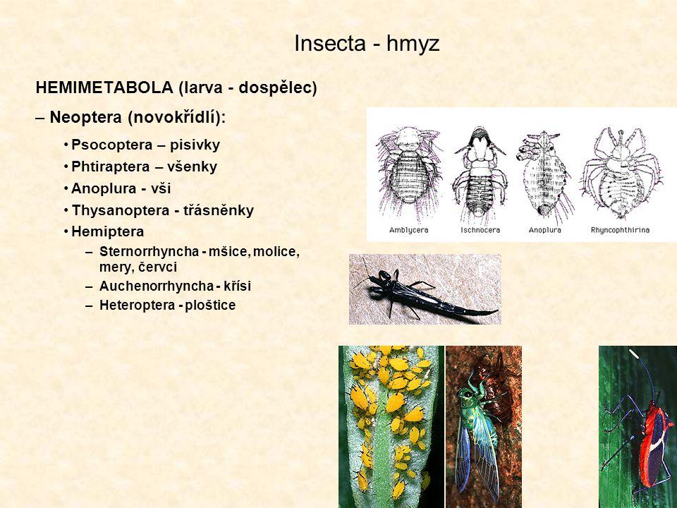 Insecta - hmyz HEMIMETABOLA (larva - dospělec) –Neoptera (novokřídlí): Psocoptera – pisivky Phtiraptera – všenky Anoplura - vši Thysanoptera - třásněnky Hemiptera –Sternorrhyncha - mšice, molice, mery, červci –Auchenorrhyncha - křísi –Heteroptera - ploštice