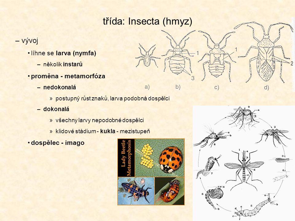 třída: Insecta (hmyz) –vývoj líhne se larva (nymfa) –několik instarů proměna - metamorfóza –nedokonalá »postupný růst znaků, larva podobná dospělci –dokonalá »všechny larvy nepodobné dospělci »klidové stádium - kukla - mezistupeň dospělec - imago