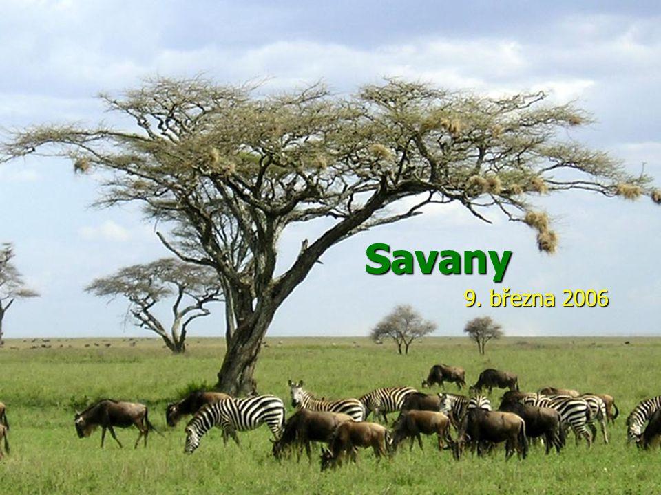 Savany 9. března 2006