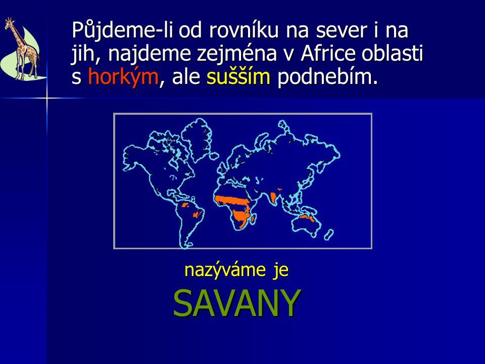 nazýváme je SAVANY nazýváme je SAVANY Půjdeme-li od rovníku na sever i na jih, najdeme zejména v Africe oblasti s horkým, ale sušším podnebím.