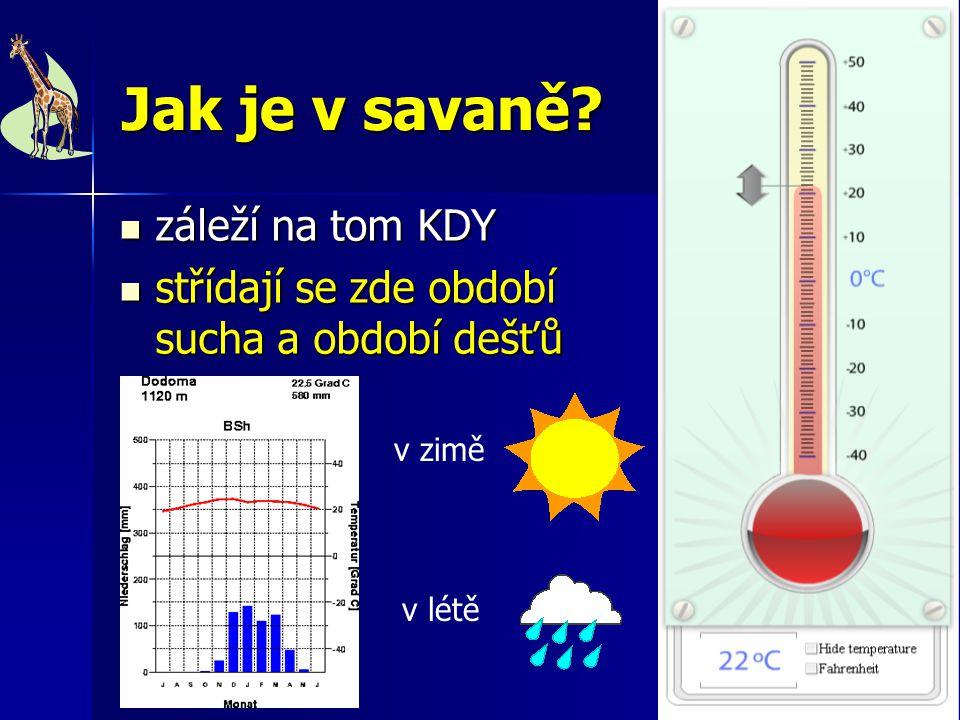 Jak je v savaně? záleží na tom KDY záleží na tom KDY střídají se zde období sucha a období dešťů střídají se zde období sucha a období dešťů v zimě v