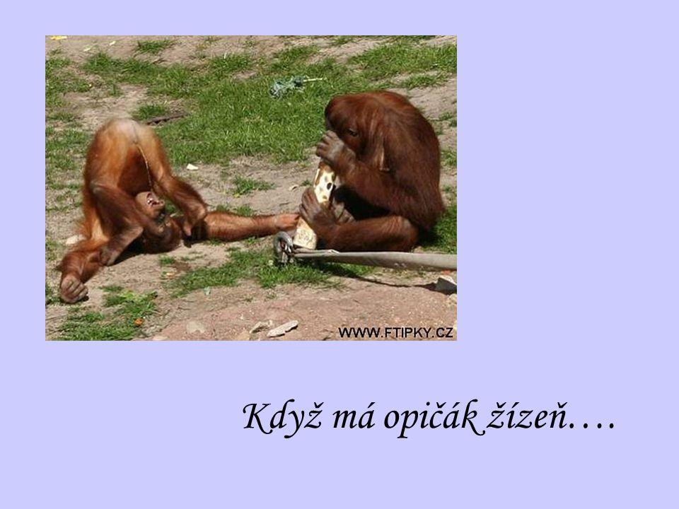 Když má opičák žízeň….