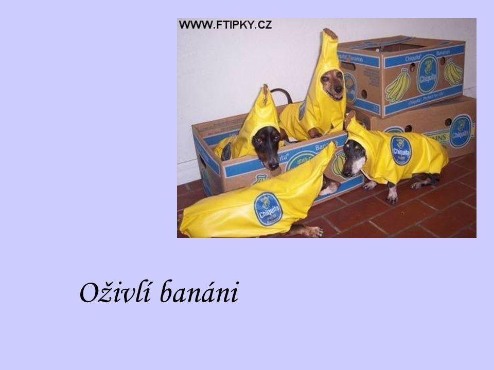Oživlí banáni