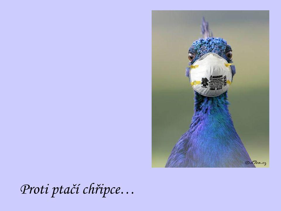 Proti ptačí chřipce…