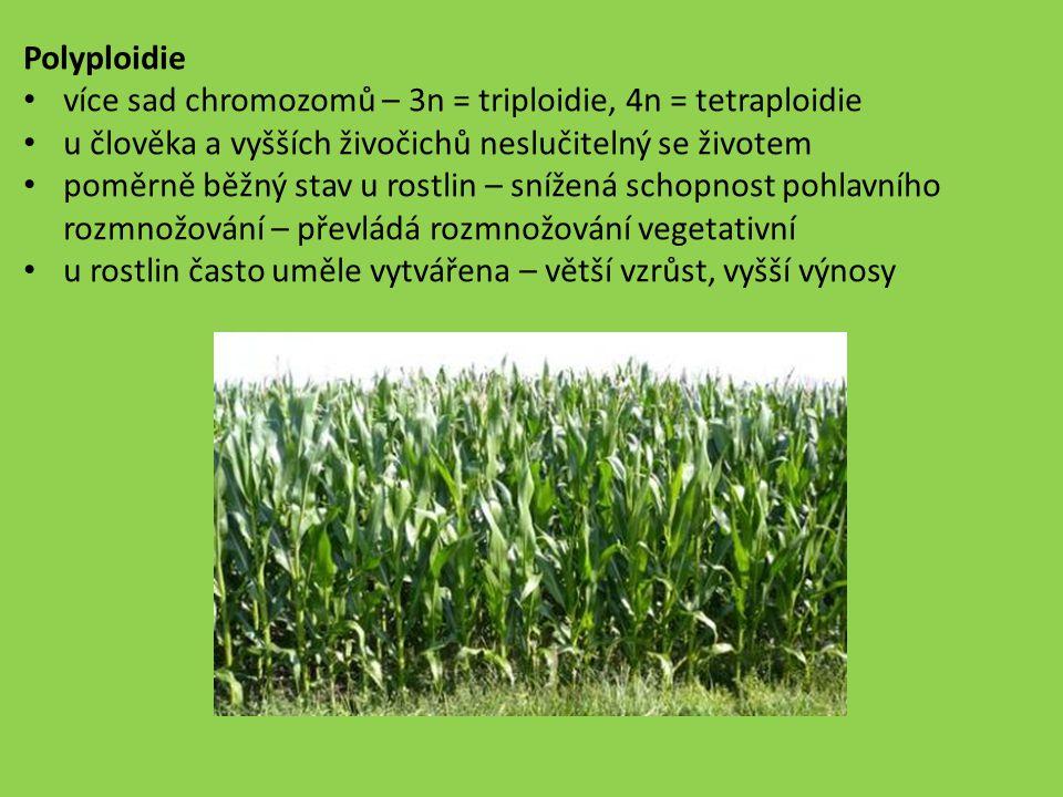 Polyploidie více sad chromozomů – 3n = triploidie, 4n = tetraploidie u člověka a vyšších živočichů neslučitelný se životem poměrně běžný stav u rostli