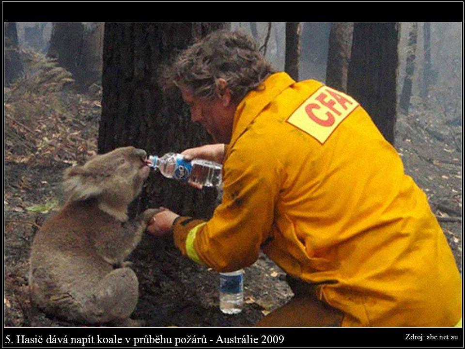 5. Hasič dává napít koale v průběhu požárů - Austrálie 2009 Zdroj: abc.net.au