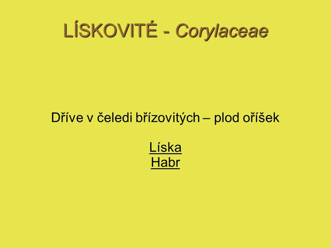 LÍSKA - Corylus Líska obecná – Corylus avellana domácí dřevina keř odolná, snese slunce i stín ne sucho Krycí keř, podrost, ovocná dřevina