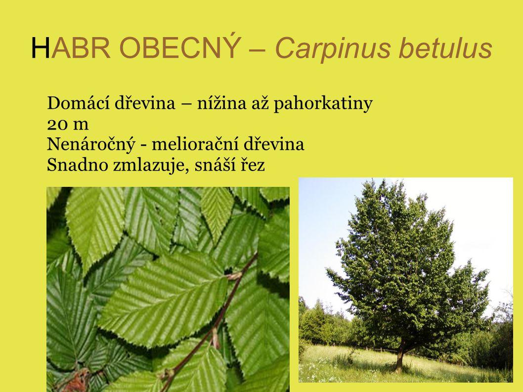 HABR OBECNÝ – Carpinus betulus Domácí dřevina – nížina až pahorkatiny 20 m Nenáročný - meliorační dřevina Snadno zmlazuje, snáší řez