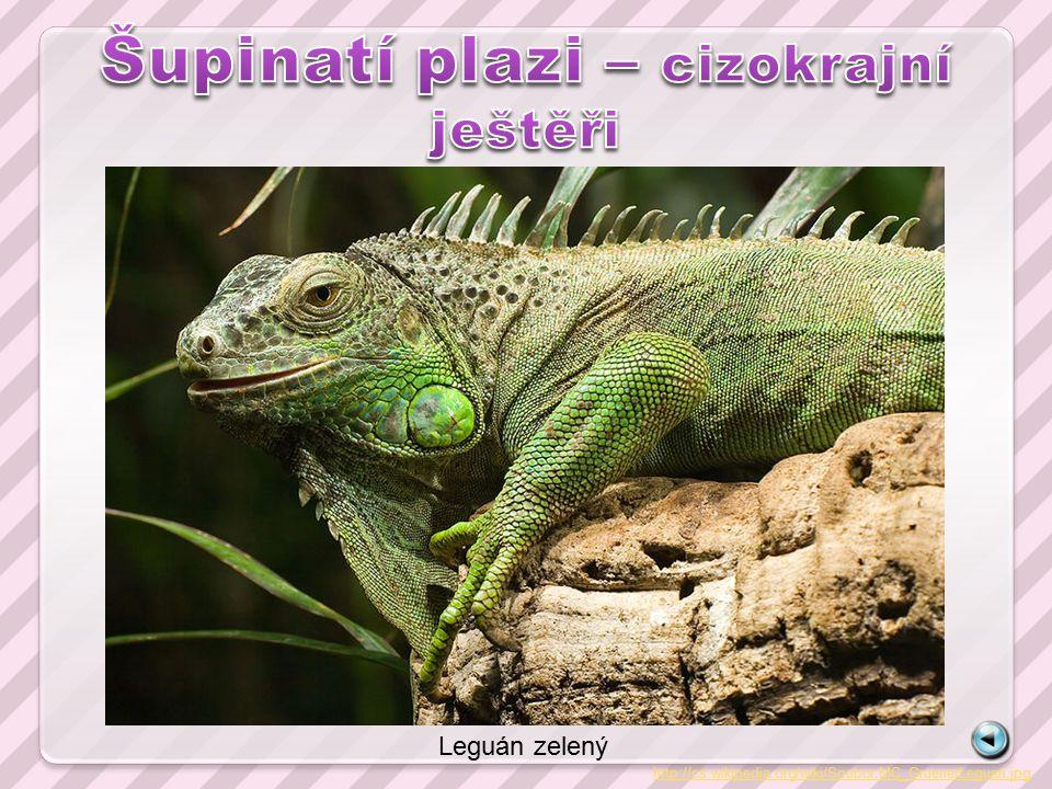 http://cs.wikipedia.org/wiki/Soubor:MC_GruenerLeguan.jpg Leguán zelený