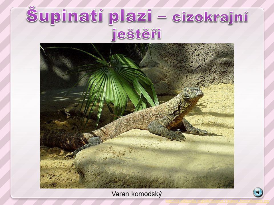 http://cs.wikipedia.org/wiki/Soubor:Varanus_komodoensis.jpg Varan komodský