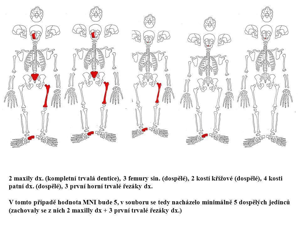 2 maxily dx. (kompletní trvalá dentice), 3 femury sin. (dospělé), 2 kostí křížové (dospělé), 4 kosti patní dx. (dospělé), 3 první horní trvalé řezáky
