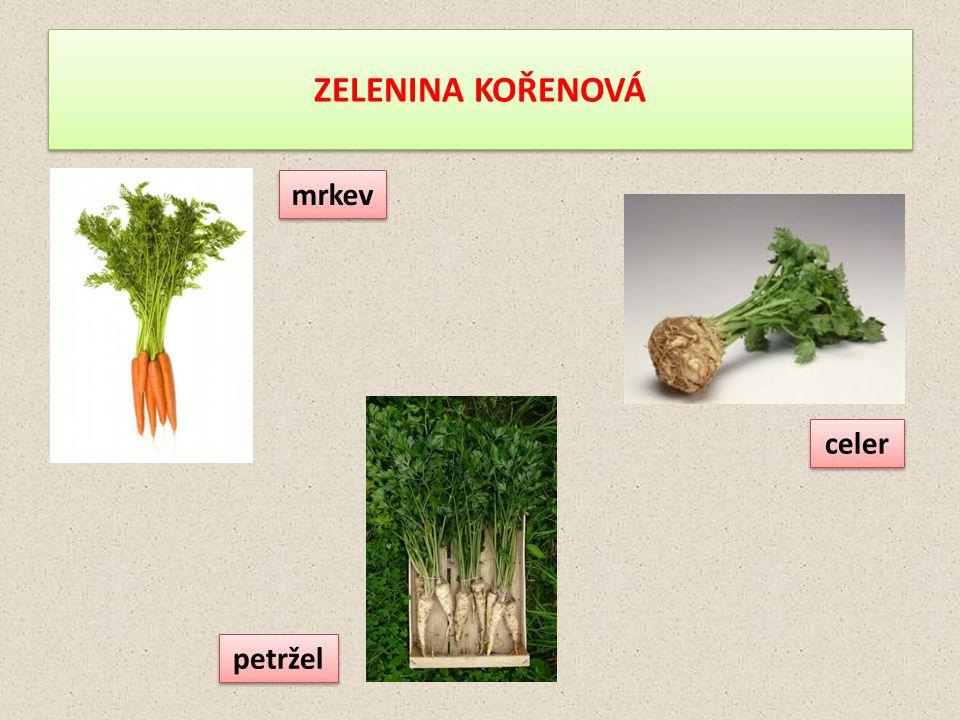 ZELENINA KOŘENOVÁ mrkev petržel celer