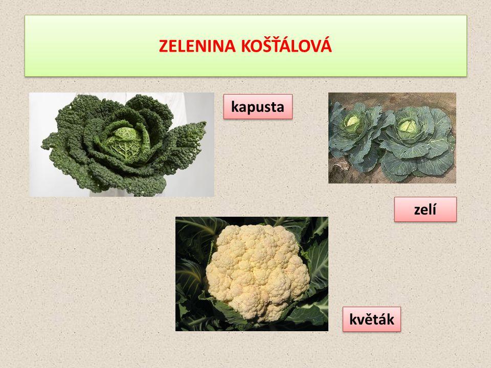 ZELENINA KOŠŤÁLOVÁ zelí kapusta květák