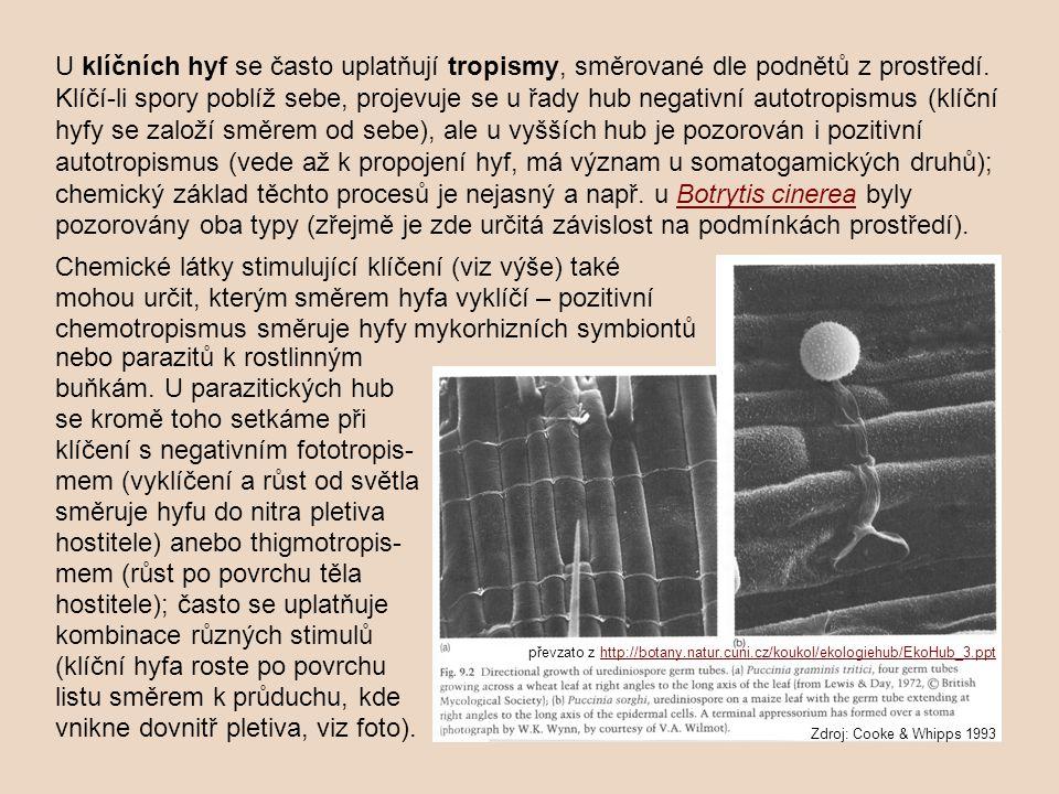 Zdroj: Cooke & Whipps 1993 převzato z http://botany.natur.cuni.cz/koukol/ekologiehub/EkoHub_3.ppthttp://botany.natur.cuni.cz/koukol/ekologiehub/EkoHub