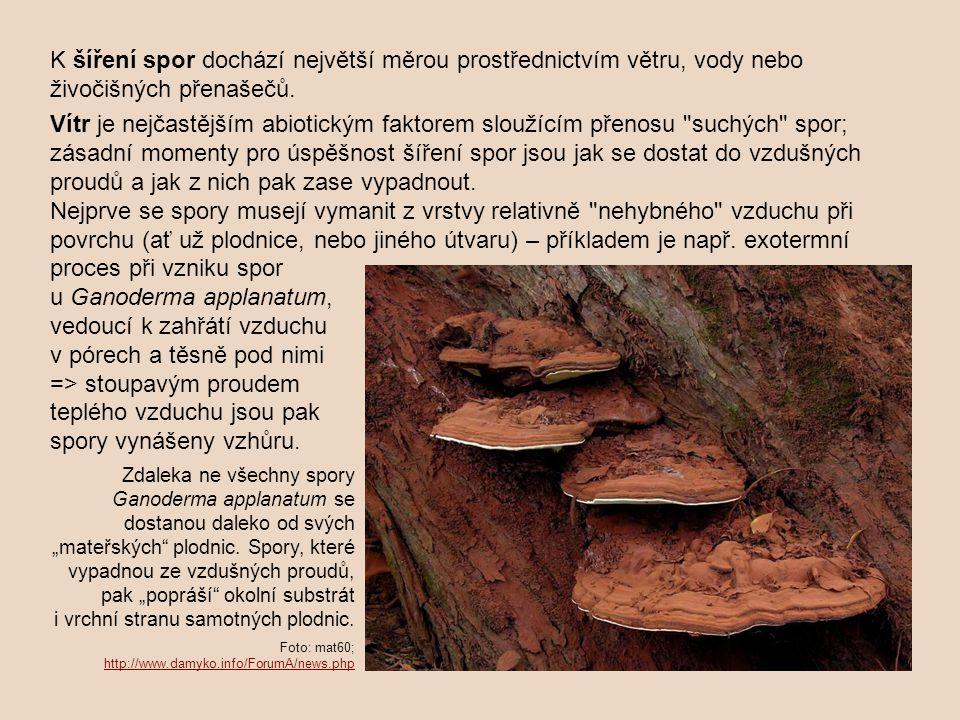 Zdroj: Cooke & Whipps 1993 převzato z http://botany.natur.cuni.cz/koukol/ekologiehub/EkoHub_3.ppthttp://botany.natur.cuni.cz/koukol/ekologiehub/EkoHub_3.ppt U klíčních hyf se často uplatňují tropismy, směrované dle podnětů z prostředí.