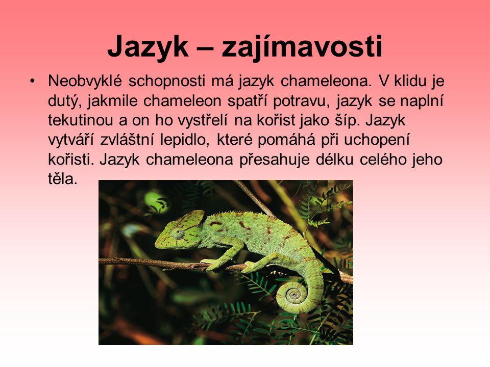 Jazyk – zajímavosti Neobvyklé schopnosti má jazyk chameleona. V klidu je dutý, jakmile chameleon spatří potravu, jazyk se naplní tekutinou a on ho vys